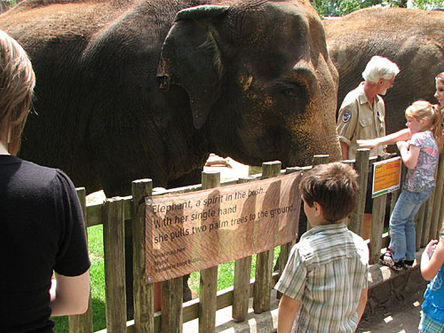 Kid-reading-poetry-w-Elepha
