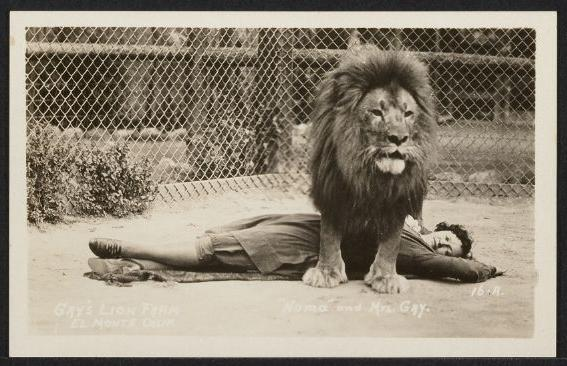 Muriel Gay with lion Numa